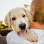 Top Tips to Help Your New Dog Feel Right at Home